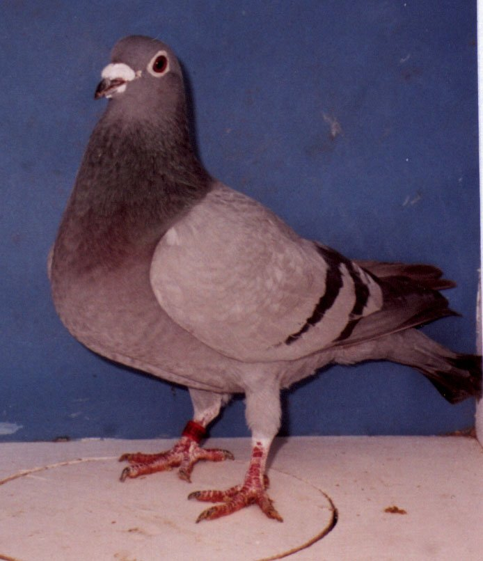 10 Hen