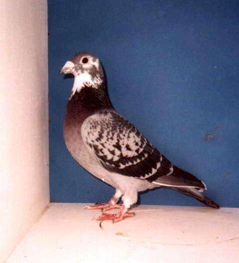 Derek's Hen