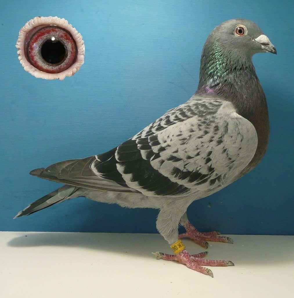 Lessay Hen