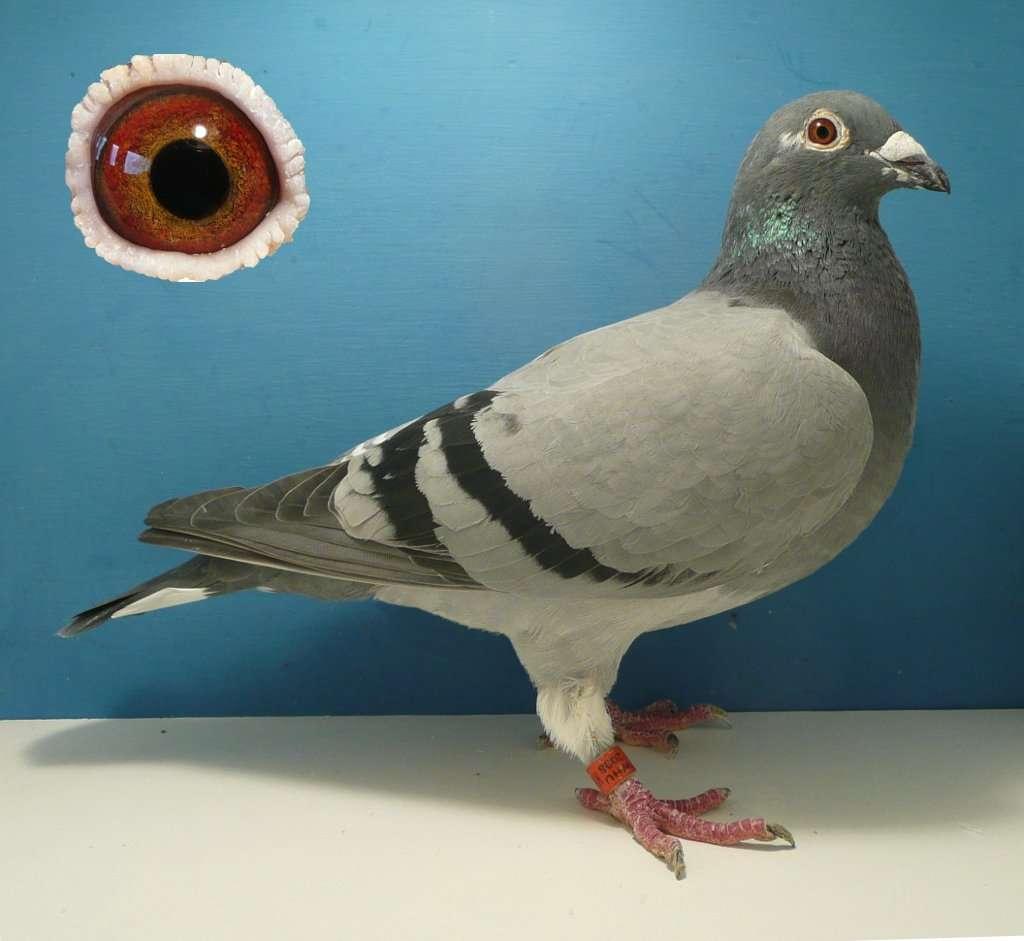 Lillers Hen