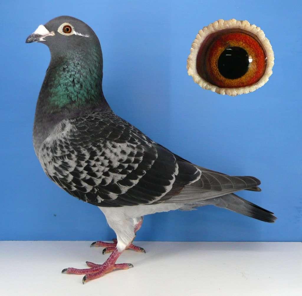 Iddie Hen