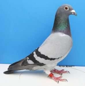 Pau Supreme Hen